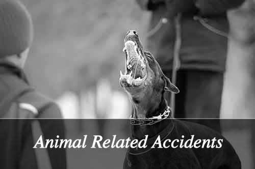 Animal Related Accidents